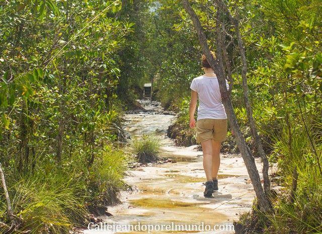 senderos lintang trail parque nacional bako borneo