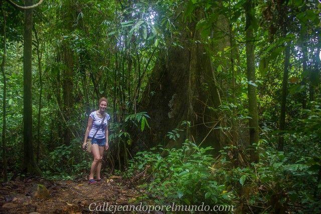 camino a las waterfalls parque nacional kubah y matang