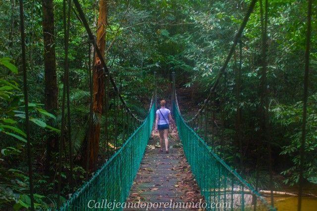 parque nacional kubah y matang borneo