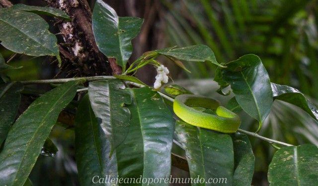 serpiente parque nacional bako borneo