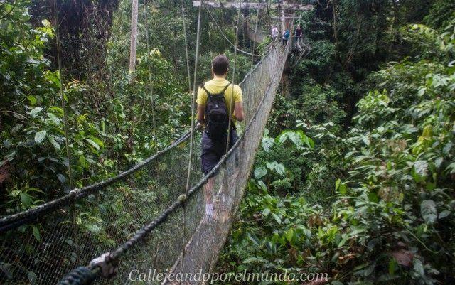 canopy walk gunung mulu borneo malasia 2