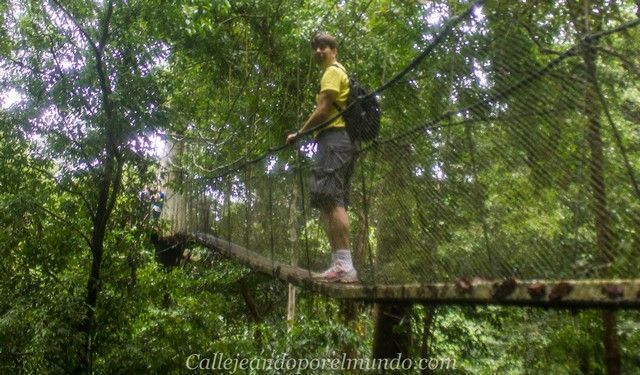 canopy walk gunung mulu borneo malasia