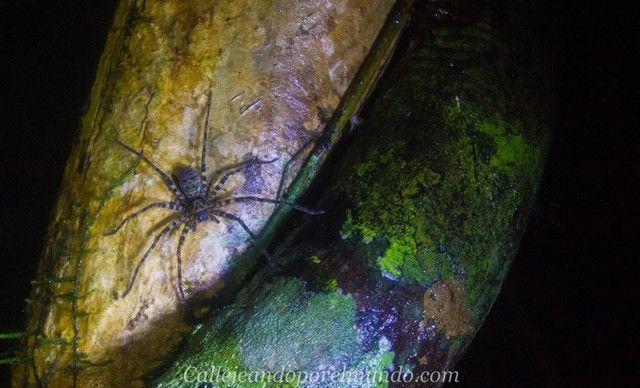salida nocturna gunung mulu borneo malasia 6