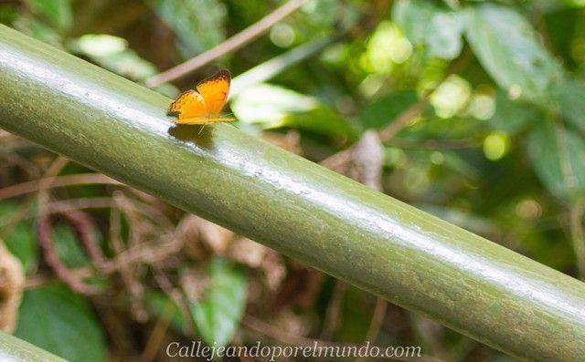 mariposa centro de recuperacion del oso sepilok