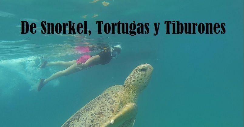 tortugas y tiburones perhentian besar