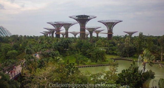 singapur-en-24-horas-gardens-by-the-bay-diurno-2