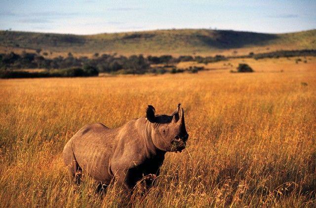 luna-de-miel-en-africa-kenia-y-tanzania-13