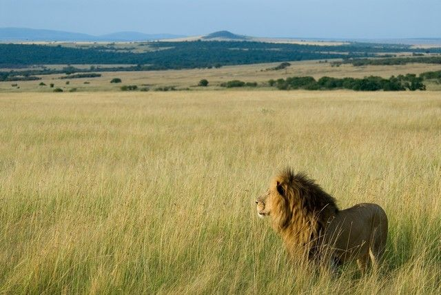 luna-de-miel-en-africa-kenia-y-tanzania-4