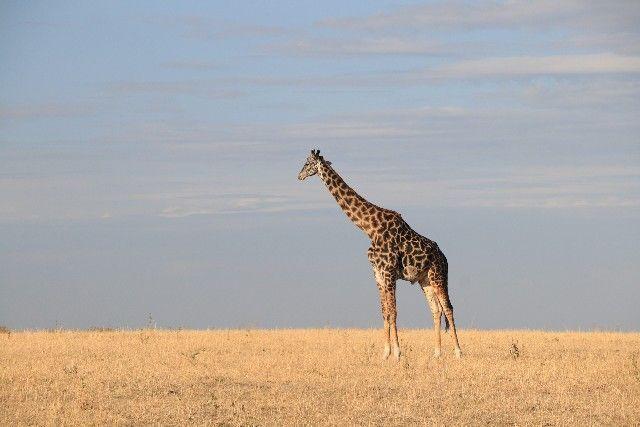 kenia y tanzania 2016 01