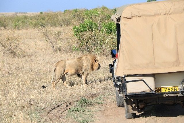 kenia y tanzania 2016 2