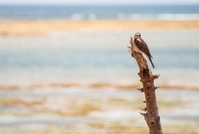 pajaro the sands at chale island diani beach kenia