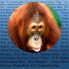 Mi guía de Borneo