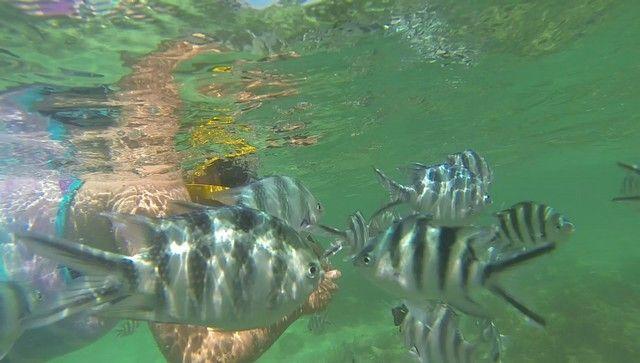 snorkel diani beach mombasa kenia (1)
