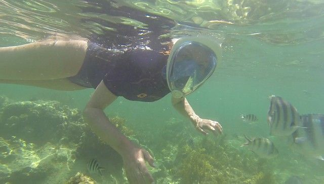 snorkel diani beach mombasa kenia (5)
