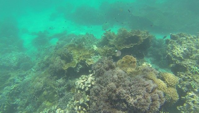 fondos marinos kisite national park kenia (1)