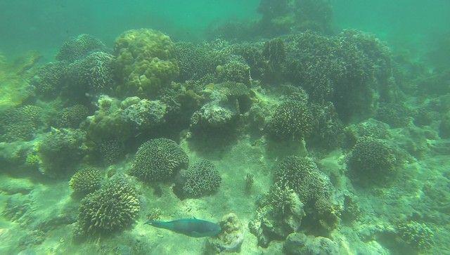 fondos marinos kisite national park kenia (3)