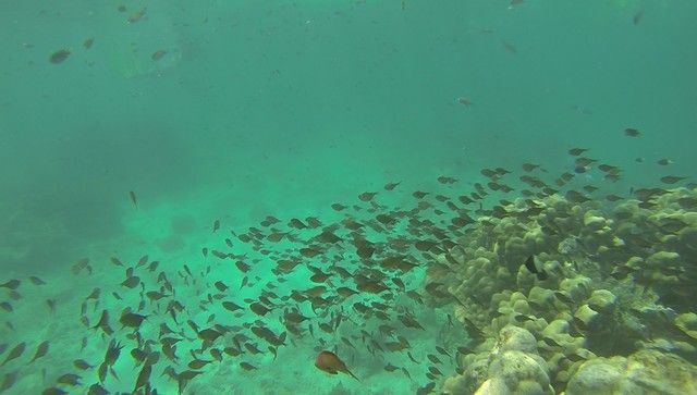 fondos marinos kisite national park kenia (7)