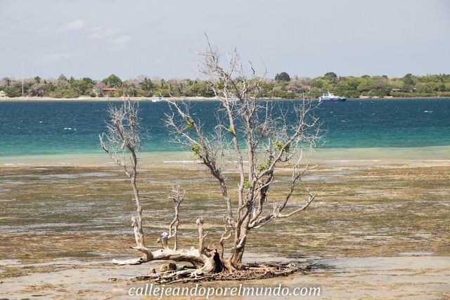 wasini kisite national park kenia
