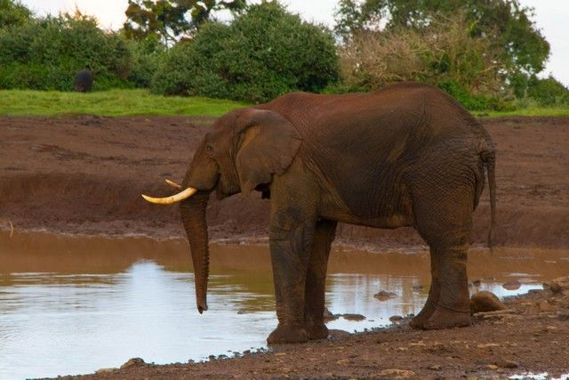 elefantes parque nacional aberdare kenia (4)
