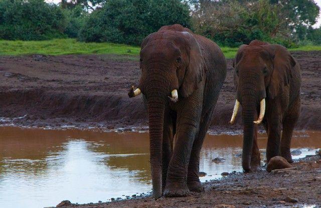 elefantes parque nacional aberdare kenia (6)