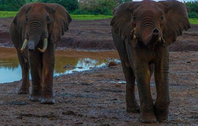 elefantes parque nacional aberdare kenia (7)