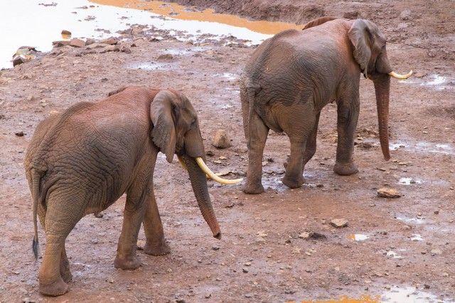 elefantes parque nacional aberdare kenia