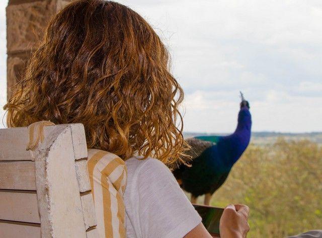 pavos en parque nacional aberdare kenia