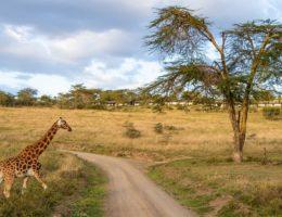 Gran Safari en el Norte de Tanzania