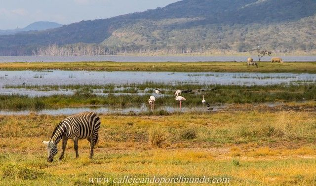 lago nakuru kenia (2)