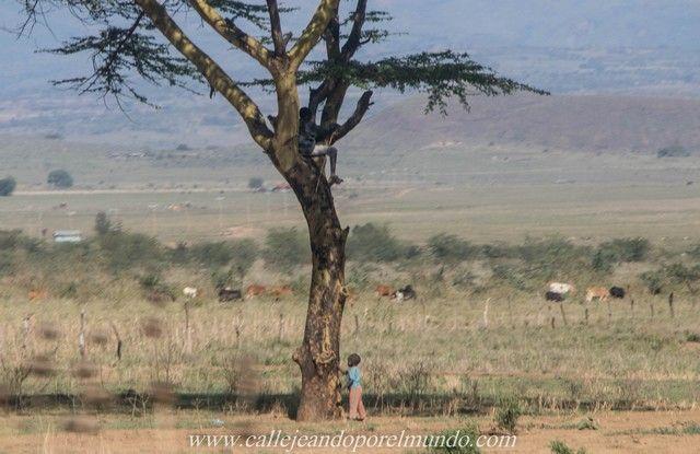 masai mara kenia (3)