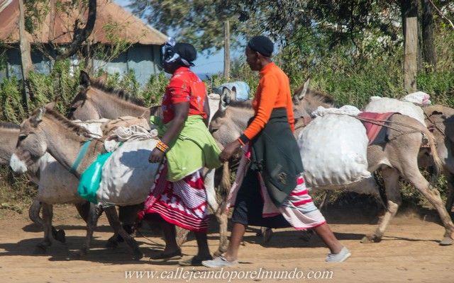 masai mara kenia (4)