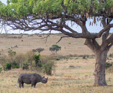 masai mara la llegada portada
