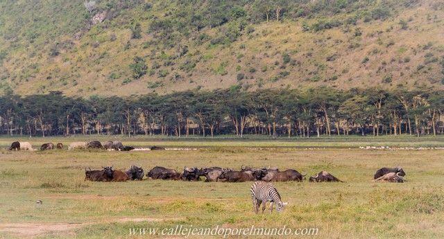 panoramica lago nakuru kenia