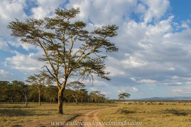 sabana africana lago nakuru kenia