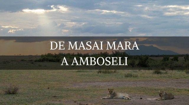 De Masai Mara a Amboseli