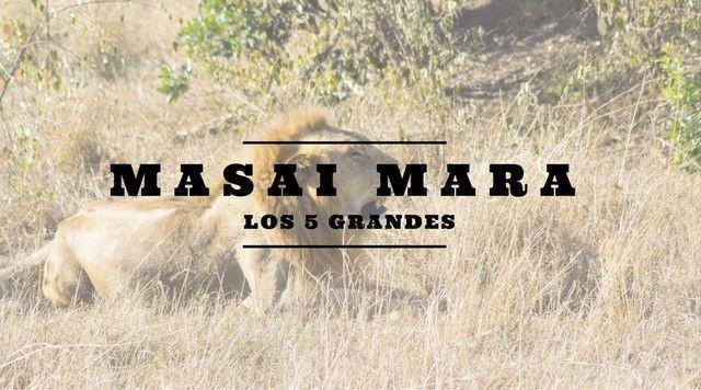 Masai Mara y el rey leon