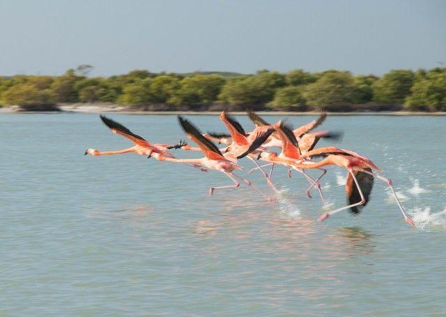 flamencos rosas rio lagartos yucatan (4)