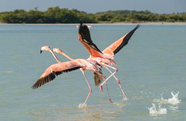 flamencos rosas rio lagartos yucatan (7)