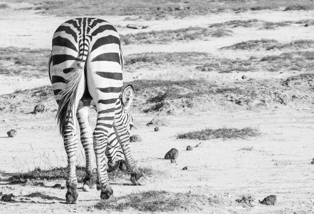 parque nacional amboseli kenia (13)