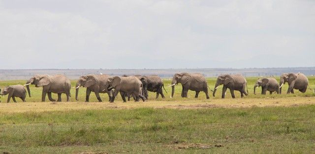 parque nacional amboseli kenia (25)