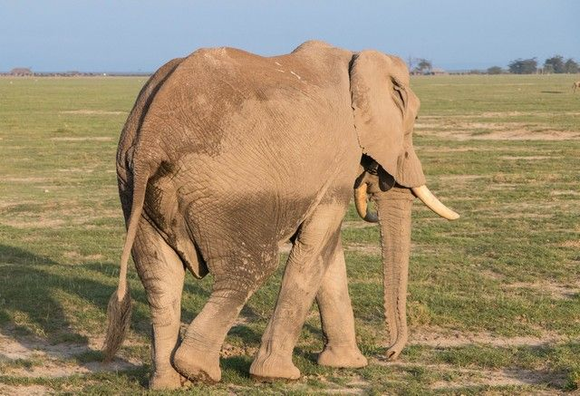 parque nacional amboseli kenia (3)