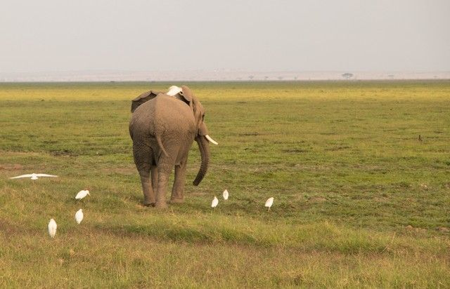 parque nacional amboseli kenia (7)