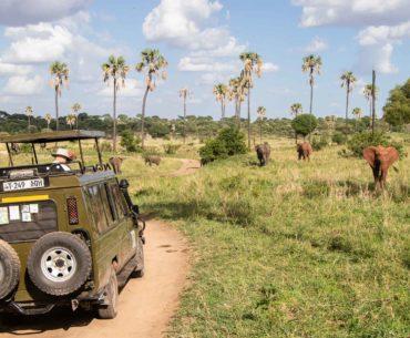 parque nacional tarangire tanzania portada