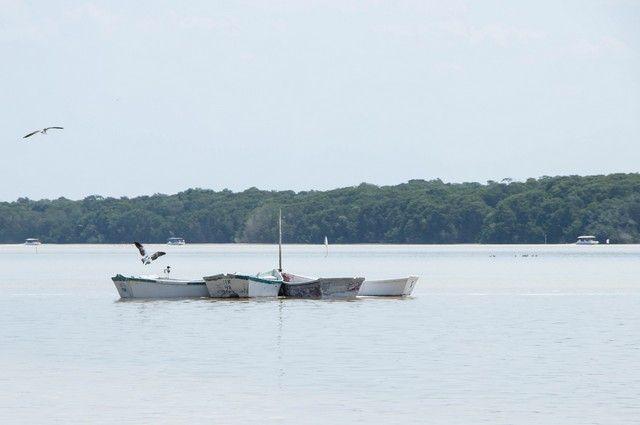 reserva biosfera ria celestún yucatan mexico (2)