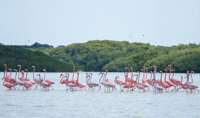 reserva biosfera ria celestún yucatan mexico (6)