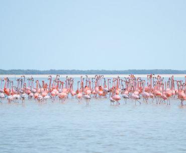 reserva biosfera ria celestún yucatan mexico portada