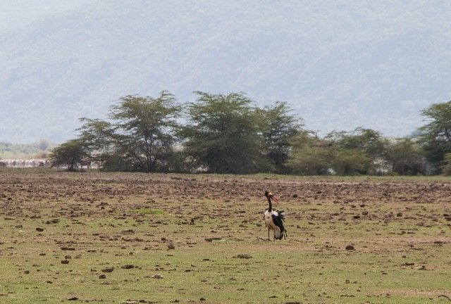 safari lago manyara tanzania (14)