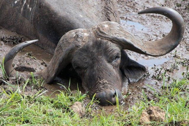 safari lago manyara tanzania (16)