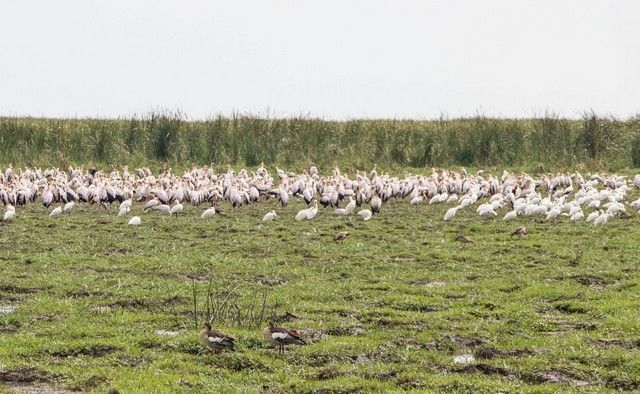 safari lago manyara tanzania (17)