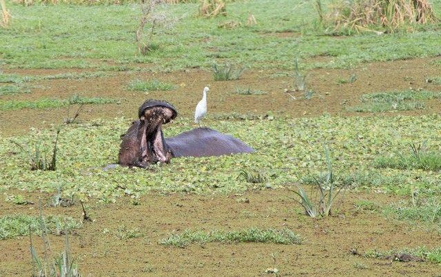 safari lago manyara tanzania (19)